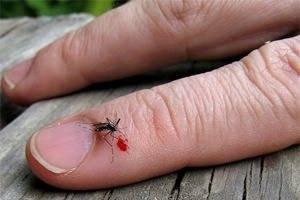 Чем помазать укус насекомого