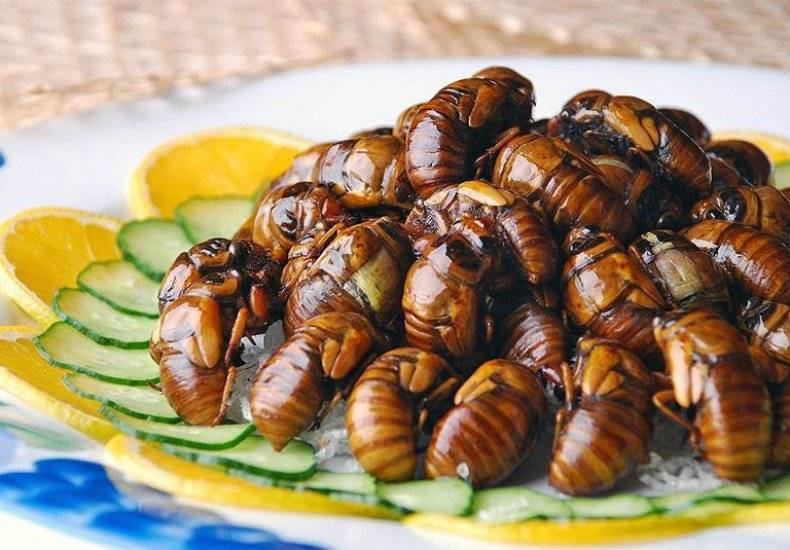 Поющее насекомое