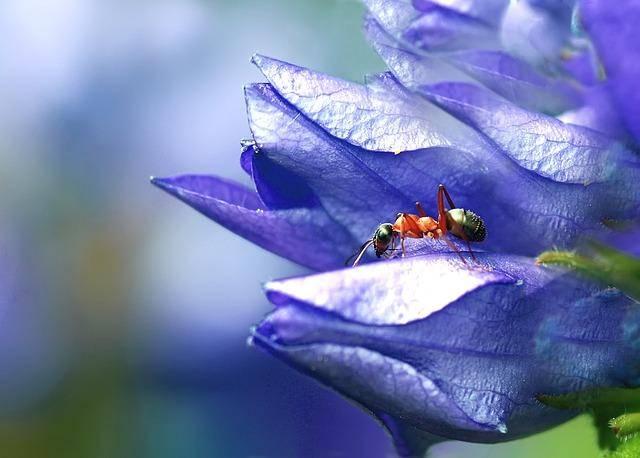 Как извести муравьев в доме