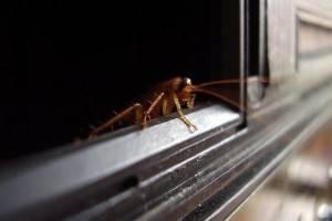 Почему тараканы не едят огурцы