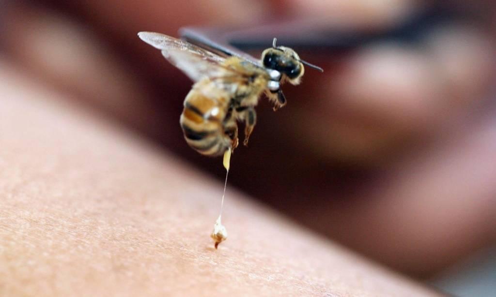 Мазь при укусе насекомых