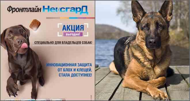 Таблетки для животных от блох и клещей