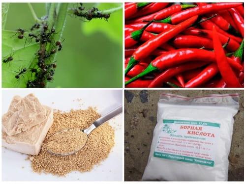Методы борьбы с садовыми муравьями