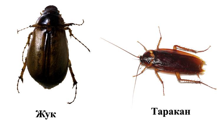 Тараканы жуки