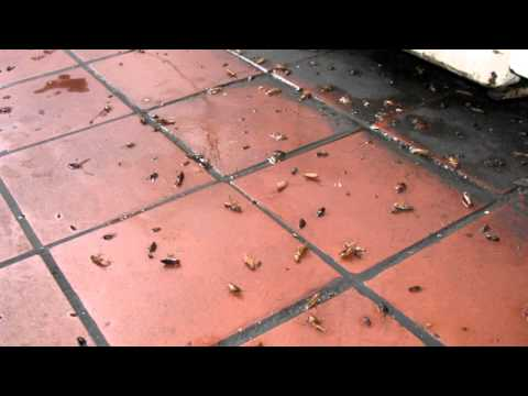 Травля тараканов в квартире
