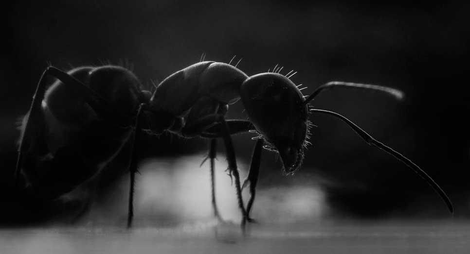 К чему снятся муравьи во сне