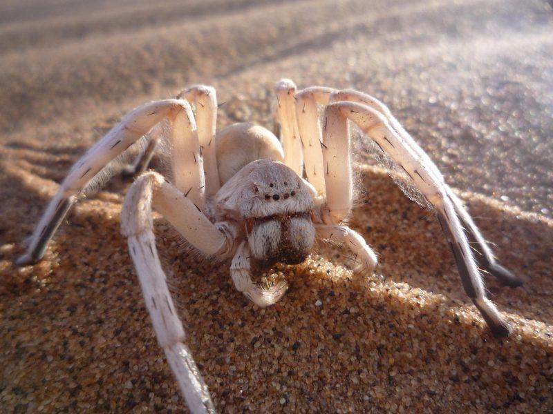 К чему снятся огромные пауки