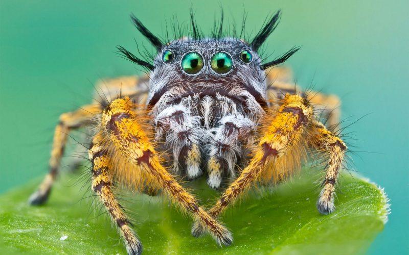 Если приснились пауки