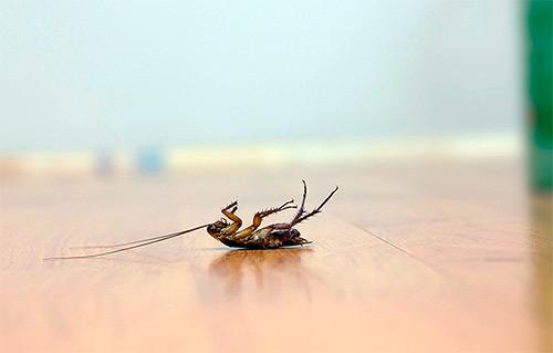 Как избавиться от тараканов борной кислотой