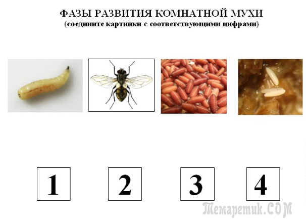 Откуда берутся мухи в доме